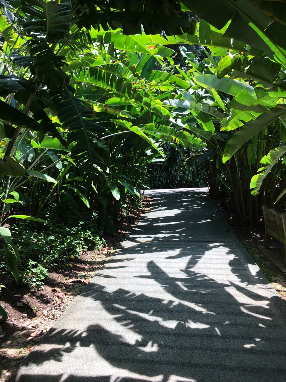 Heliconia Walk at Botanic Gardens Singapore